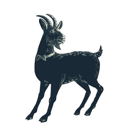 ったら、ヤギを着て孤立の背景に scraperboard、蝶ネクタイのイラスト。  イラスト・ベクター素材