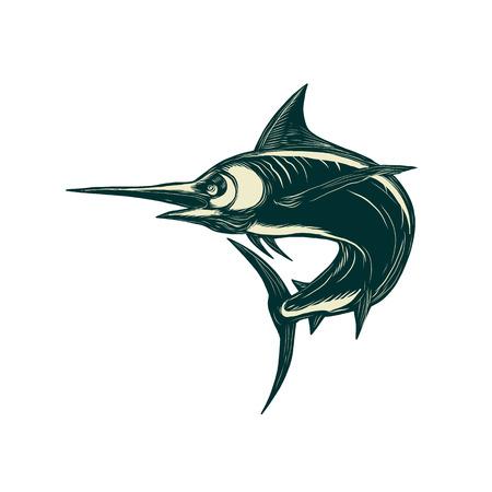 Scratchboard style sailfish vector illustration.