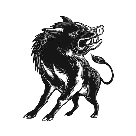 Scratch board style illustration of an angry wild hog.