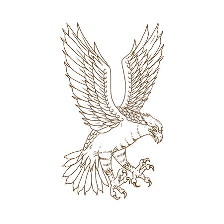 Zeichnungsskizzen-Artillustration des Fischadlers oder des Seefalken. Swooping vom Fliegen betrachtet angesehen von der Seite auf lokalisiertem Hintergrund. Standard-Bild - 89338114