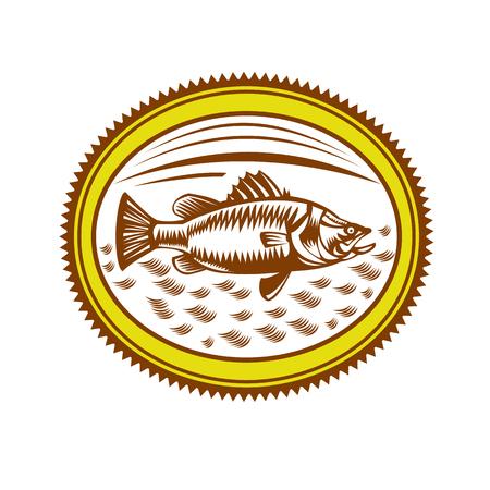 塩水のレトロなスタイルのイラスト バラマンディやバラマンディ、アジア シーバス (Lates calcarifer)、分離された背景にロゼット内部 catadromous 魚の種