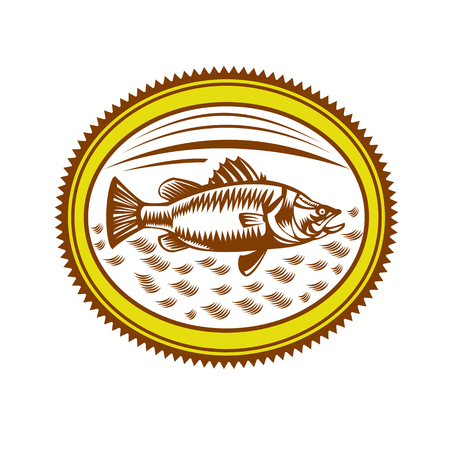 Retro style illustration of saltwater barramundi or barramundi, Asian sea bass (Lates calcarifer), a species of catadromous fish inside rosette on isolated background. Ilustração