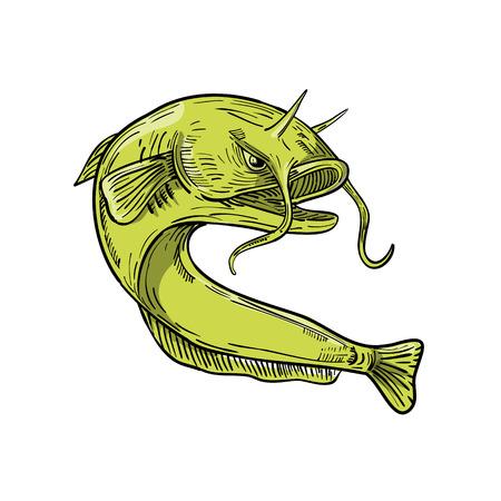 Tekening schets stijl illustratie van de gigantische duivel meerval of goonch, een zeer grote soort meerval in het geslacht Bagarius, springen op geïsoleerde achtergrond. Stock Illustratie