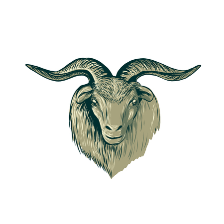 Drawing sketch style illustration of a cashmere goat head viewed from front Ilustração