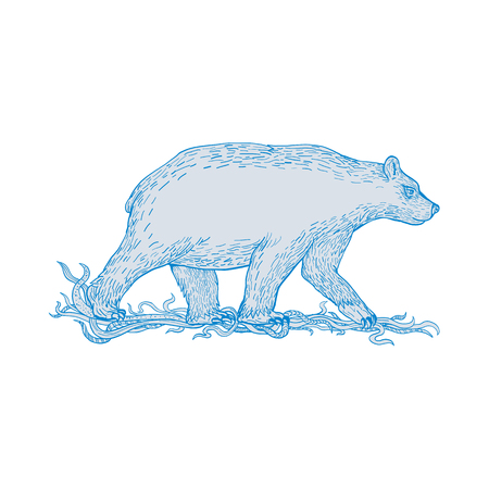 Drawing sketch style illustration of a polar bear, carnivorous bear in the Artic Circle, walking viewed from side on isolated background. Illustration