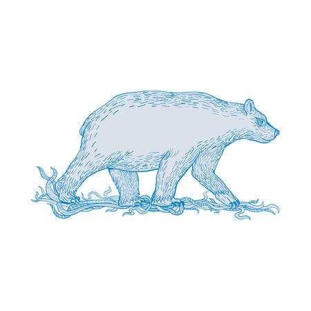 Zeichnungsskizzen-Artillustration eines Eisbären, Fleisch fressender Bär im Artic Circle, gehend angesehen von der Seite auf lokalisiertem Hintergrund. Standard-Bild - 91723857