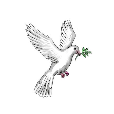 Illustration de style tatouage d'une colombe ou d'un pigeon volant avec une branche d'olivier. Banque d'images - 92050753