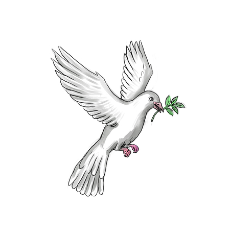 Tattoo style illustration of a dove or pigeon flying with olive branch. Фото со стока