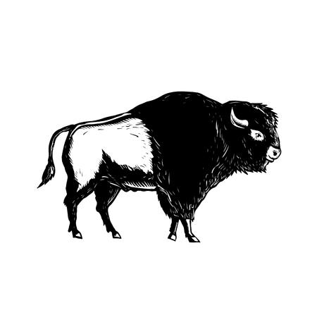 De retro illustratie van de houtdrukstijl van een Amerikaanse die buffel of een bizon van kant wordt bekeken in zwart-wit op geïsoleerde achtergrond wordt gedaan.
