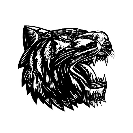 Retro woodcut style illustration of a growling tiger head viewed from side done in black and white on isolated background.