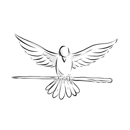 Drawing sketch style illustration of a soaring dove or pigeon with wing spread clutching a wooden staff or cane viewed from front on isolated background. Illustration