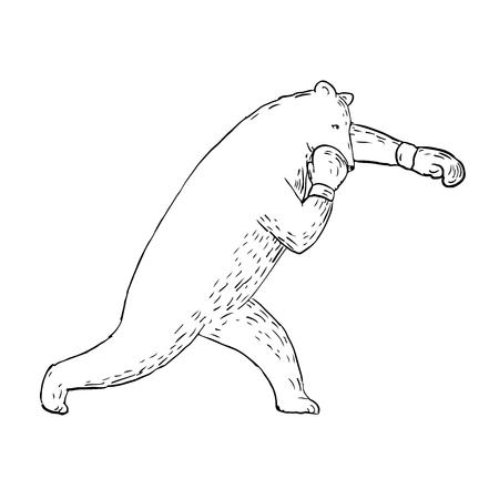 Illustrazione di stile di schizzo di disegno di un orso kodiak, dell'orso grigio o dell'orso bruno che lancia un pugno diritto sinistro o una croce osservata dal lato. Archivio Fotografico - 95585645
