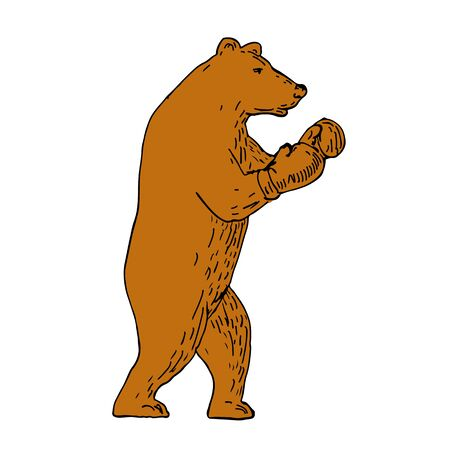 Drawing sketch style illustration of a brown bear, Ursus arctos, grizzly boxer wearing gloves in boxing stance viewed from side. Illustration