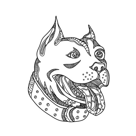 Doodle art illustration of head of pit bull,American Pit Bull Terrier, American Staffordshire Terrier, American Bully or Staffordshire Bull Terrier done in black and white mandala style. Illustration