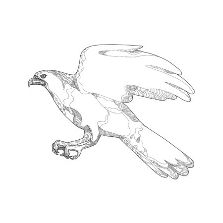 Doodle art illustration of northern goshawk, Accipiter gentilis, a medium-large raptor in family Accipitridae, that includes other extant diurnal raptors, like eagles, buzzards and harriers, swooping done in mandala style. Illustration