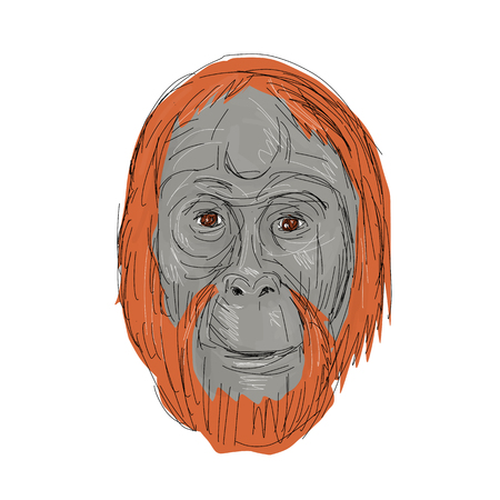 Drawing sketch style illustration of head of an unflanged male orangutan, an extant species of great apes native to Indonesia and Malaysia on isolated background.