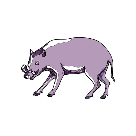 Drawing sketch style illustration of a babirusa or deer-pig, a genus, Babyrousa, in the swine family found the Indonesian islands of Sulawesi, Togian, Sula and Buru, walking and viewed from side. Ilustrace