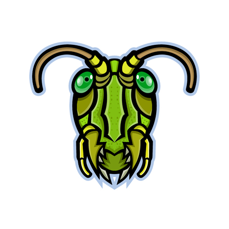 Mascot icon illustration of head of a grasshopper or locust, insects of the suborder Caelifera within the order Orthoptera, viewed from front on isolated background in retro style. 矢量图像