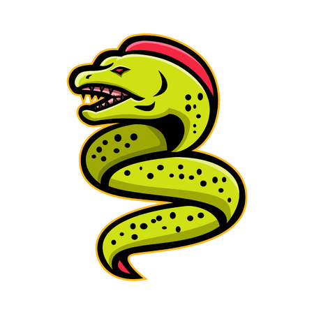 Mascot icon illustration of an angry moray eel or muraenidae with pharyngeal jaw going up viewed from side on isolated background in retro style.