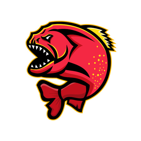 Mascot icon illustration of an angry piranha, pirana or caribe, a member of family Characidae in order Characiformes, a South American freshwater fish on isolated background in retro style.