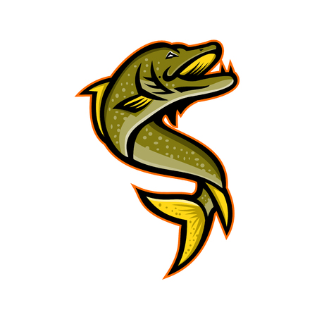 Mascot icon illustration of a Northern pike, Esox, Muskellunge, Tiger muskellunge or muskie fish viewed from high angle on isolated background in retro style. Stock Illustratie