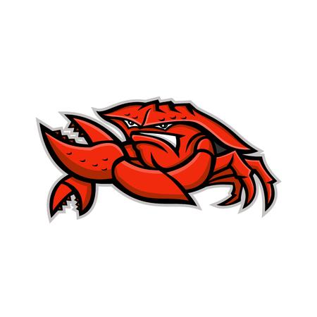 Ilustración del icono de la mascota de un cangrejo real rojo enojado o cangrejo de tierra, un crustáceo decápodo con exoesqueleto grueso, flexionando su pinza visto de frente sobre fondo aislado en estilo retro.