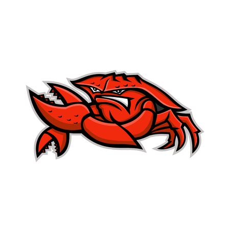 Mascotte pictogram illustratie van een boze rode koningskrab of landkrab, een tienpotige schaaldier met dik exoskelet, buigen zijn tang van voren gezien op geïsoleerde achtergrond in retro stijl.