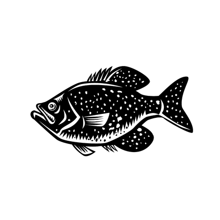 Retro woodcut style illustration of a  crappie fish, papermouths, strawberry bass, speckled bass, specks, speckled perch, crappie bass, calico bass, a North American fresh water fish viewed from side. Illustration