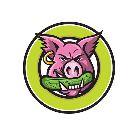 Mascot icon illustration of head of a wild pig, boar or hog biting a pickle or gherkin, a pickled cucumber viewed from front set in circle on isolated background in retro style.