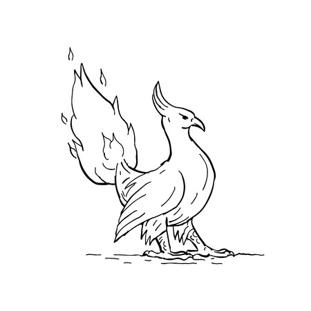 Drawing sketch style illustration of a a phoenix, in Greek mythology, a long-lived bird that cyclically regenerates obtaining new life by rising from the ashes, with burning tail on fire flames. Ilustração
