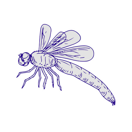 Drawing sketch style illustration of dragonfly flapping wings side view on white background.