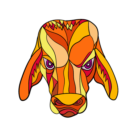 Mosaic low polygon style illustration of a brahma bulll head viewed from front on isolated white background done in color.