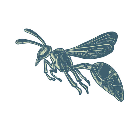 Scratchboard style illustration of a wasp, yellowjacket or hornet flying viewed from side  done on scraperboard on isolated background.