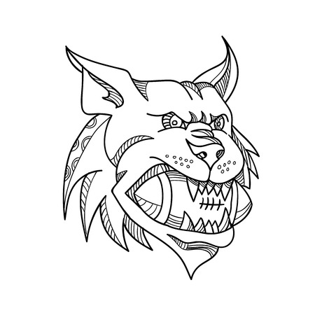 Mono line illustration of a head of a Canada lynx, bobcat, Eurasian lynx or Iberian lynx biting an American football ball viewed from front  done in black and white monoline style. Illustration