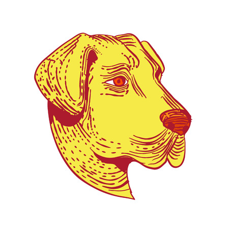 Etching style illustration of head of an Anatolian Shepherd Dog, a mountain dog breed that protects livestock viewed from side done on scraperboard scratchboard style in color