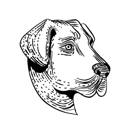 Etching style illustration of head of an Anatolian Shepherd Dog, a mountain dog breed that protects livestock viewed from side done on scraperboard scratchboard style in black and white.