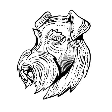 Etching style illustration of head of Airedale Terrier, Bingley Terrier or Waterside Terrier, a dog breed of the terrier type viewed from side done on scraperboard scratchboard style in black and white.