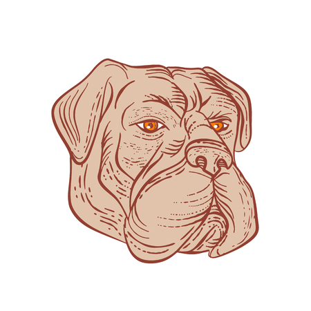 Etching style illustration of a bullmastiff, a large-sized domestic dog breed, with solid build and short muzzle like the molosser dog done on scraperboard scratchboard style in color. Illustration