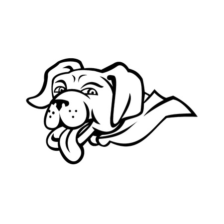 Sports mascot icon illustration of head of a labrador retriever dog wearing a cape with tongue out  viewed from side on isolated background in black and white retro style. Illustration