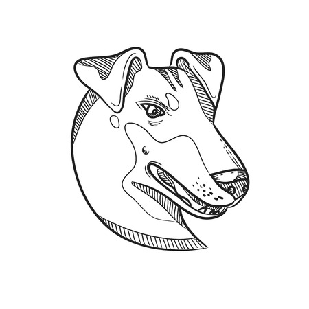 Drawing sketch style illustration of head of a Manchester Terrier, a breed of dog of the smooth-haired terrier type viewed from side on isolated white background in black and white.  イラスト・ベクター素材