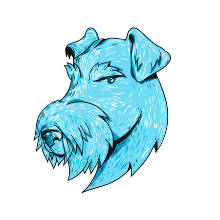 Drawing sketch style illustration head of a Airedale Terrier, Bingley Terrier or Waterside Terrier, the largest of all terriers also known as the ÒKing of TerriersÓ on isolated white background.  イラスト・ベクター素材