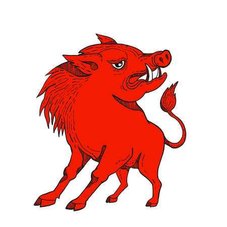 Doodle art illustration of a red razorback, wild pig boar or hog looking to side on isolated background done in bright red colorcaricature style.