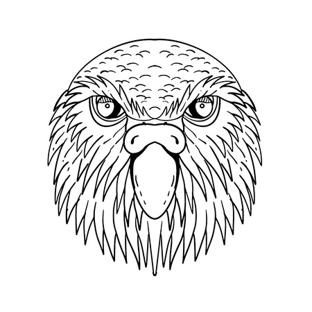 Drawing sketch style illustration of head of kakapo, night parrot or owl parrot, a species of flightless, nocturnal, ground-dwelling parrot endemic to New Zealand done in black and white. Illustration