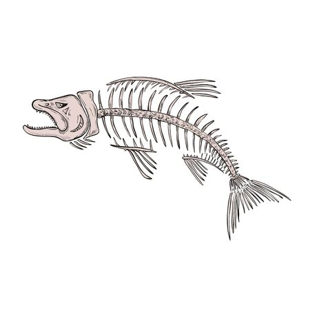 Drawing sketch style illustration of a skeletal system or skeleton of  king salmon or trout viewed from side on isolated white background. Illustration