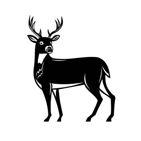 Ilustración de estilo retro grabado en madera de un venado de cola blanca, venado de cola blanca o de Virginia, un venado de tamaño mediano nativo de América del Norte y del Sur vista lateral sobre fondo aislado hecho en blanco y negro.
