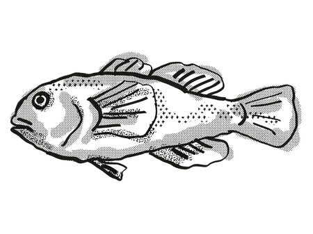Retro cartoon style drawing of a Plain Coralgoby  , a native Australian marine life species viewed from side on isolated white background done in black and white.