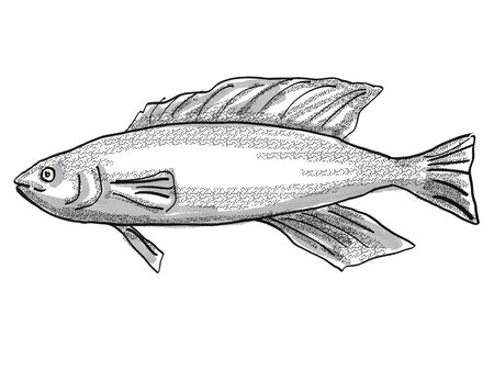 Retro cartoon style drawing of a Butterfish or Odax Pullus , a native New Zealand marine life species viewed from side on isolated white background done in black and white Imagens