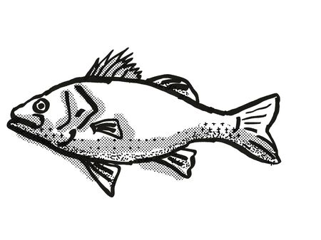 Retro cartoon style drawing of a Australian Bass , a native Australian marine life species viewed from side on isolated white background done in black and white
