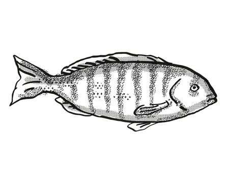 Retro cartoon style drawing of a Zebrafish , a native Australian marine life fish species viewed from side on isolated white background done in black and white. Stock Photo