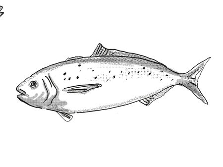Retro cartoon style drawing of a Blue warehou, a native New Zealand marine life species viewed from side on isolated white background done in black and white